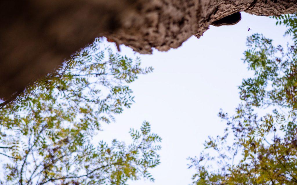 Natuur nature photography fotografie